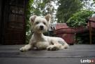 Cherie Hotel dla psów, strzyżenie zwierzaków