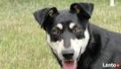 Shadow psi anioł Nowy Tomyśl