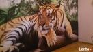 Tapetowanie-klejenie fototapet-sztukaterii-509-983-864 - 6
