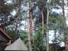 Wycinka Drzew - Darmowa Wycena
