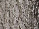 Kupię Drewno Z Orzecha Włoskiego Jabłoni innych Owocowych - 2