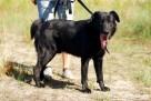 FRUGO - będzie wiernym przyjacielem całej rodziny - adopcja - 2