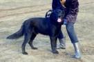 FRUGO - będzie wiernym przyjacielem całej rodziny - adopcja - 1