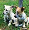 6 miesięczne, małe, urocze szczeniaki wyrzucone na śmietnik - 3