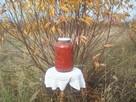 Kiszony owoc dzikiej róży - 5