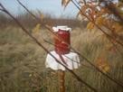 Kiszony owoc dzikiej róży - 6