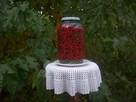 Kiszony owoc dzikiej róży - 8