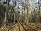 Sprzedam las wraz z gruntem. Miejscowość Sławiny k.Garwolina