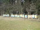 Odkłady pszczele 4 ramkowe, pszczoły, wysyłka lub dowóz
