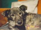 WILCZUŚ-wspaniały, bardzo kochany, przyjazny starszy psiak- - 10
