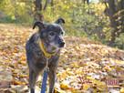 WILCZUŚ-wspaniały, bardzo kochany, przyjazny starszy psiak- - 7
