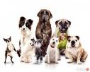 Domowy Psi Hotel dla psów Hostel Święta Wyjazdy Urlopy Zielona Góra