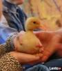 warsztaty zoologiczne z udziałem zwierząt - 4