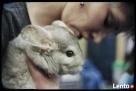 warsztaty zoologiczne z udziałem zwierząt - 7