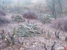 Usuwanie wiatrołomów, wycinka drzew, czyszczenie działek  - 1