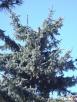 Usuwanie wiatrołomów, wycinka drzew, czyszczenie działek  - 2