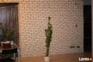 kamien gipsowy imitacja piaskowca białej cegły Okazja - 7