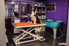 Salon dla zwierząt SPA 4 DOG - Jelcz-Laskowice Jelcz Laskowice
