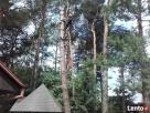Wycinka drzew Białystok