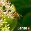 Pakiety pszczele, pszczoły