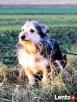 TRYSIO-maleńki, spokojny,niekonfliktowy psiak uratowany od z - 4