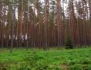 Sprzedam las