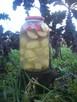 Kiszone jabłka z ziemniakami - 6
