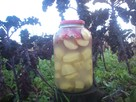 Kiszone jabłka z ziemniakami - 2