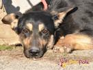 MILKY-młody psiak po przejściach-szukamy spokojnego opiekuna - 5