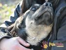 MILKY-młody psiak po przejściach-szukamy spokojnego opiekuna - 8
