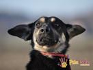 MILKY-młody psiak po przejściach-szukamy spokojnego opiekuna - 2