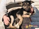 MILKY-młody psiak po przejściach-szukamy spokojnego opiekuna - 3