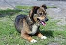 Fred - mały, towarzyski i lubiący pieszczoty; psi ideał - 12
