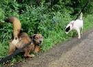 Fred - mały, towarzyski i lubiący pieszczoty; psi ideał - 5