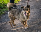 Fred - mały, towarzyski i lubiący pieszczoty; psi ideał - 6