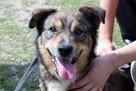 Fred - mały, towarzyski i lubiący pieszczoty; psi ideał - 9