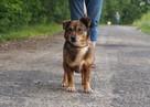 Fred - mały, towarzyski i lubiący pieszczoty; psi ideał - 2