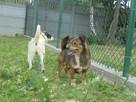 Fred - mały, towarzyski i lubiący pieszczoty; psi ideał - 7
