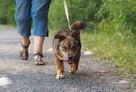 Fred - mały, towarzyski i lubiący pieszczoty; psi ideał - 3