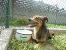 Fred - mały, towarzyski i lubiący pieszczoty; psi ideał - 8
