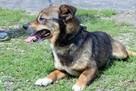 Fred - mały, towarzyski i lubiący pieszczoty; psi ideał - 13