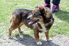 Fred - mały, towarzyski i lubiący pieszczoty; psi ideał - 1