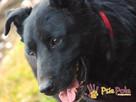 PAN KOKOS-piękny, dorodny, bardzo miły i przyjazny psiak - 12