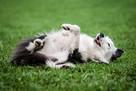 SKUTECZNE szkolenie Twojego psa, cała Wawa! - 17