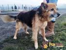 VIDAM-nieduży, dość spokojny, przyjazny psiak szuka dobrego - 4